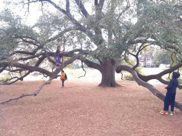 The tree!