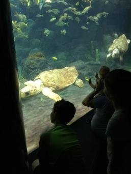 Sea turtles!