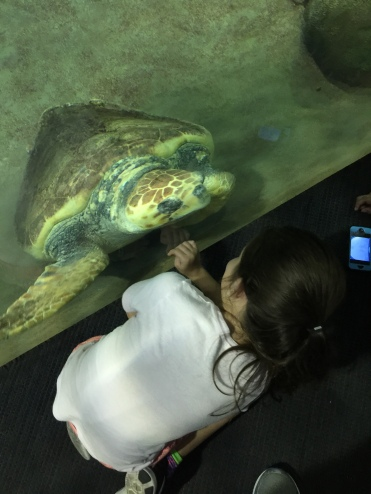 Turtle up close!